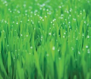 water lawn